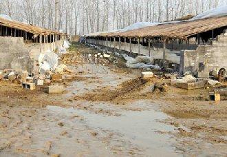 <b>湖南涟源:进行畜禽养殖场改造 减少农业污染</b>