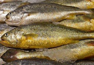 黄花鱼多少钱一斤?