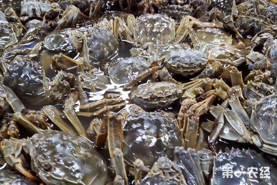 秋季河蟹为什么容易死亡?要怎么预防?