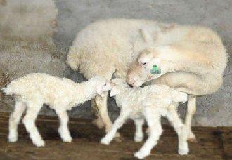 """浙江湖州:打造""""湖州模式""""的畜牧业 实现绿色发展"""
