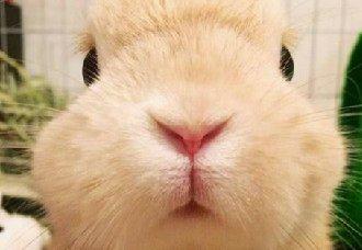 秋天兔子要怎么养?秋季养兔子的注意事项
