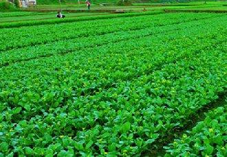 """海南菜农自制""""立体式""""排水系统,70亩菜地不被淹"""