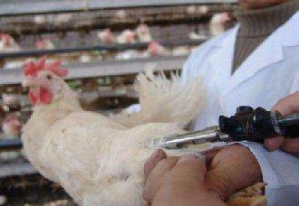 黑龙江:开展秋季重大动物疫病集中强制免疫工作