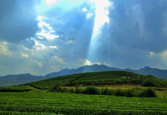 金华:做大做强抹茶产业 升级茶叶再加工