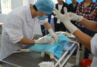 湖北远安县:畜牧兽医行政许可线上办理