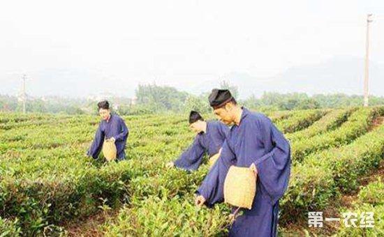 中国茶文化:汉族人的饮茶之道