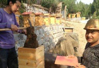 """<b>甘肃定西发展中蜂养殖,走出脱贫致富""""甜蜜路""""</b>"""