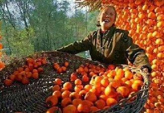 """农业部与阿里巴巴将联手打造首届农产品领域""""双十一"""""""