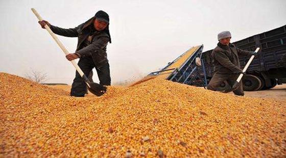 国家九部门:下发《通知》保障秋粮收购工作顺利完成
