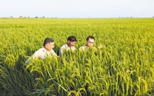 <b>一带一路之——中国巴新农业合作迎来新机遇</b>