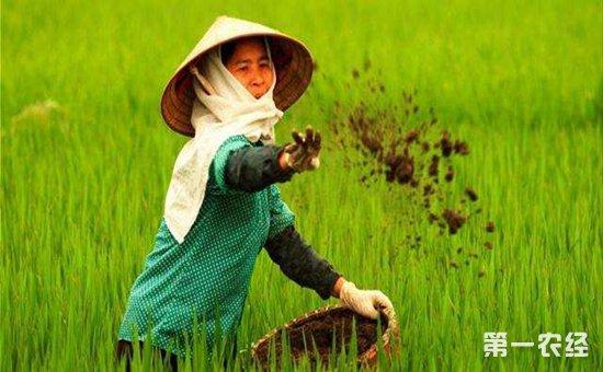 水稻化肥施洒