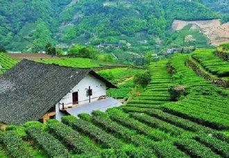 <b>湖北宜昌:茶香飘世界 叫响茶品牌</b>