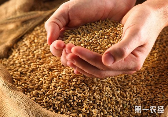 新季小麦价格行情走势如何?2018年9月17日河北河南小麦价格