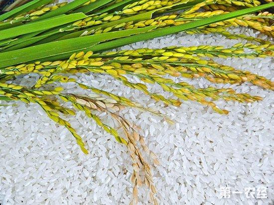 2018年9月17日玉米、小麦、水稻、面粉等粮食价格行情