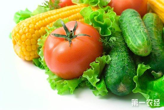 山东聊城蔬菜价格行情:7月持续上涨8月下旬稳步下行
