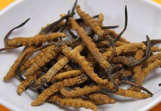冬虫夏草一斤多少钱?