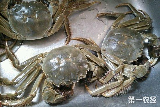 江苏常州9月18日大闸蟹批发价格对照表