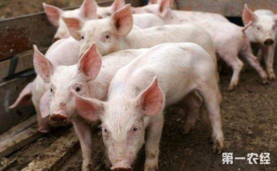 在现代生活中,我们的生活质量在不断提高,对于猪肉的要求也是越来越大了。可是养猪户们在生猪养殖的过程当中,特别容易受到猪病的困扰,这在很大程度上影响到了猪的发育生长,还会给养猪场带来巨大的经济损失。重要治病一直以来都是比较温和且实惠的,利用中药草治疗猪病,确实也有着良好的治疗效果,基于此,本文首先阐述了不同中草药的药效;其次分析了中草药在猪病防治中的实际应用。