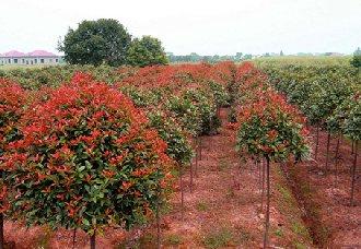 花卉苗木冬季防治病虫害的关键技术