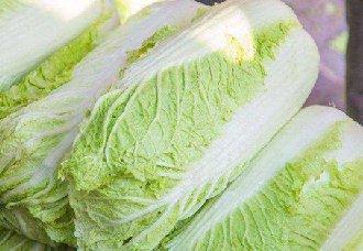 <b>白菜腐烂病要怎么治?白菜腐烂病的病因及防治措施</b>
