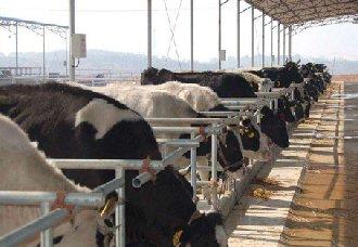 青海:构建5个现代牧场 促进畜牧业转型升级
