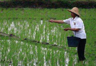 <b>宁夏:加快农业生产化肥减量增效行动</b>