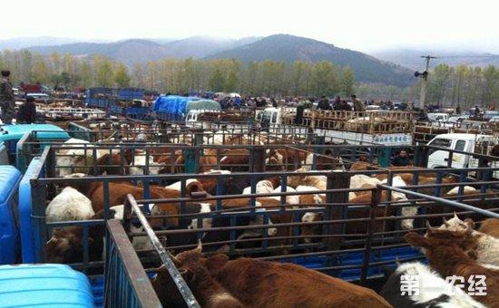 牲畜交易市场