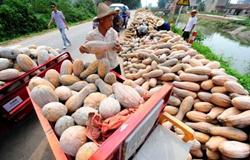 贵州螺蛳村:调整农业产业结构 南瓜带领群众脱贫