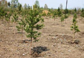 青岛市上半年完成新造林面积达11.5万亩 经济林占70%