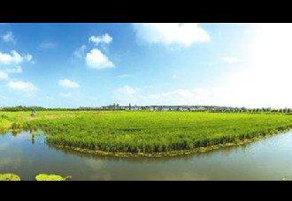 """衡阳三才村:""""稻蛙鱼""""生态种养,促进农民共同致富"""
