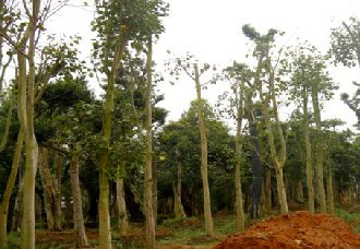 <b>福建仙游县:为提高全县绿化率 紧抓造林行动</b>
