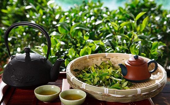 蒸青绿茶怎么冲泡?蒸青绿茶三绿一爽的特征?