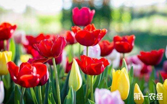 什么花在北方露栽也可以过冬?5种非常抗寒的花卉植物介绍