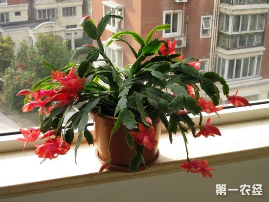 8月份可以种什么花?8月花卉播种与养护要点
