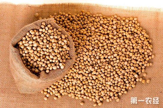 中美贸易战改变国际种植格局 美国大豆受阻巴西大豆扩增