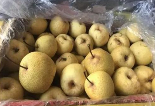 江苏海安:市工商与企业大量采购滞销农产品 缓解菜农销售压力