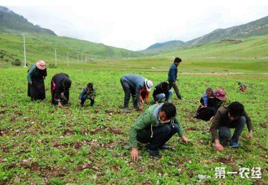 青海:村民尕藏多杰托起了拉西瓦镇群众的脱贫致富梦