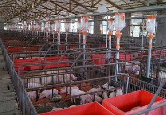 <b>养猪场要怎么进行消毒?养猪场消毒的方法介绍</b>