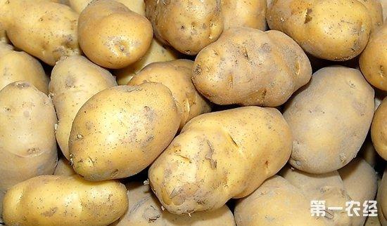 2018年9月26日马铃薯价格行情:行情平稳 价格不变