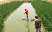 """湖南省南县获""""中国虾稻米之乡""""称号"""
