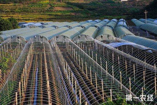 四川试点农民合作联合社 解决当前农村三大难题