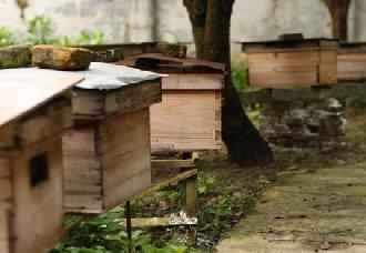 蜜蜂一箱多少钱?