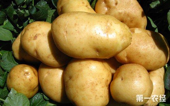 多地新薯入库量减少 马铃薯行情基本持稳