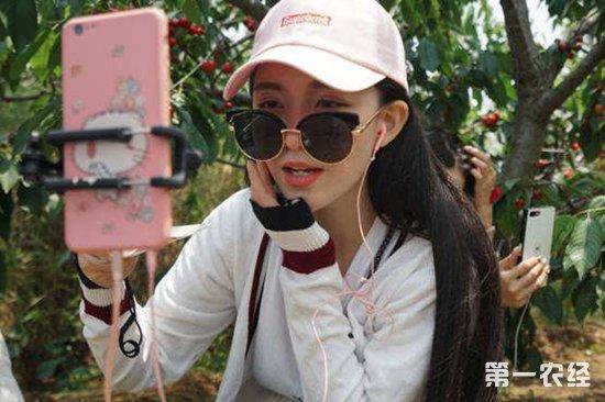 """海南""""新农村人""""手机卖水果,市场缺啥就卖啥"""