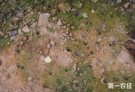 生物强化碳调节剂有效改良土壤盐渍化