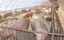 满洲里召开餐饮服务代表会议 防范非洲猪瘟