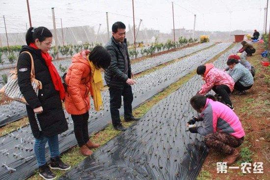 山西特聘农业技术员 精准扶贫到最后一公里