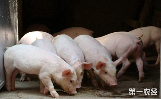 山东济南:召开非洲猪瘟等动物疫病防控工作大会