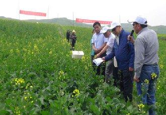 <b>青海大通县:用绿色防控技术种植油菜 减少化学农药喷洒</b>