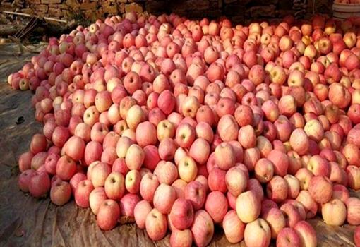 水果滞销已成常态,果农要怎么解决?如何走出困境?